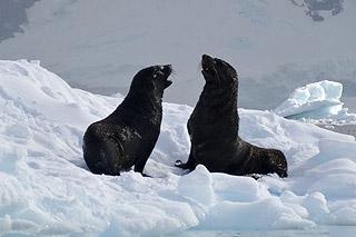 Viajar na Antártida - Um fascínio inegável 1