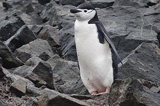 Viajar na Antártida - Um fascínio inegável 6