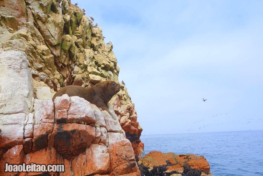 Ballestas Islands Peru