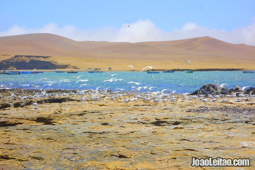 Paracas National Reserve Peru