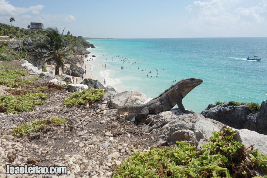 Lagarto na Praia de Tulum, Visitar o México