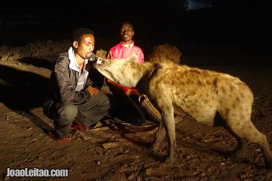 Encontro com feras selvagens – alimentando hienas na Etiópia