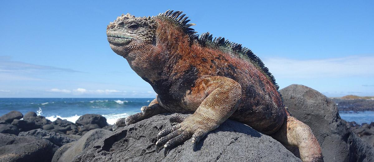 Cruzeiro Ultima Hora Galapagos