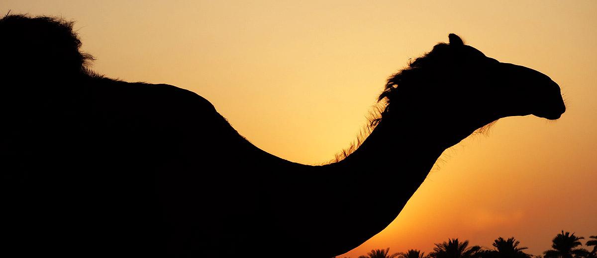 Fotografias Bahrein Barem