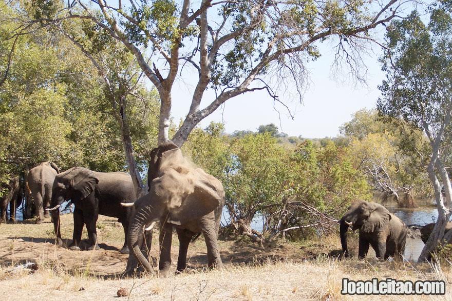 Elefantes no Parque Nacional Mosi oa Tunya, Visitar a Zâmbia