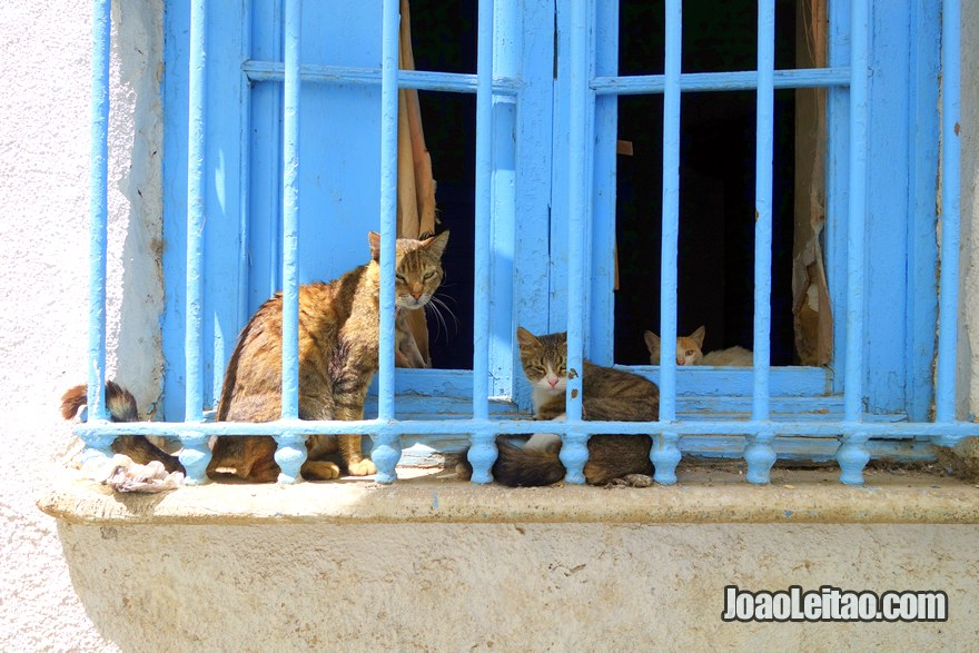 Gatos da Medina de Tunes