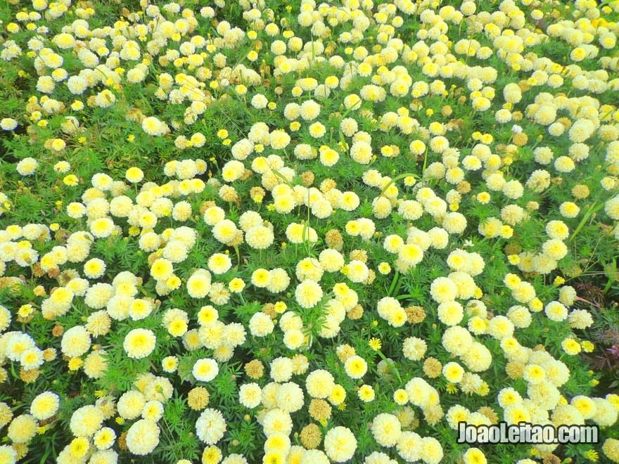 Lindas flores em Bishkek