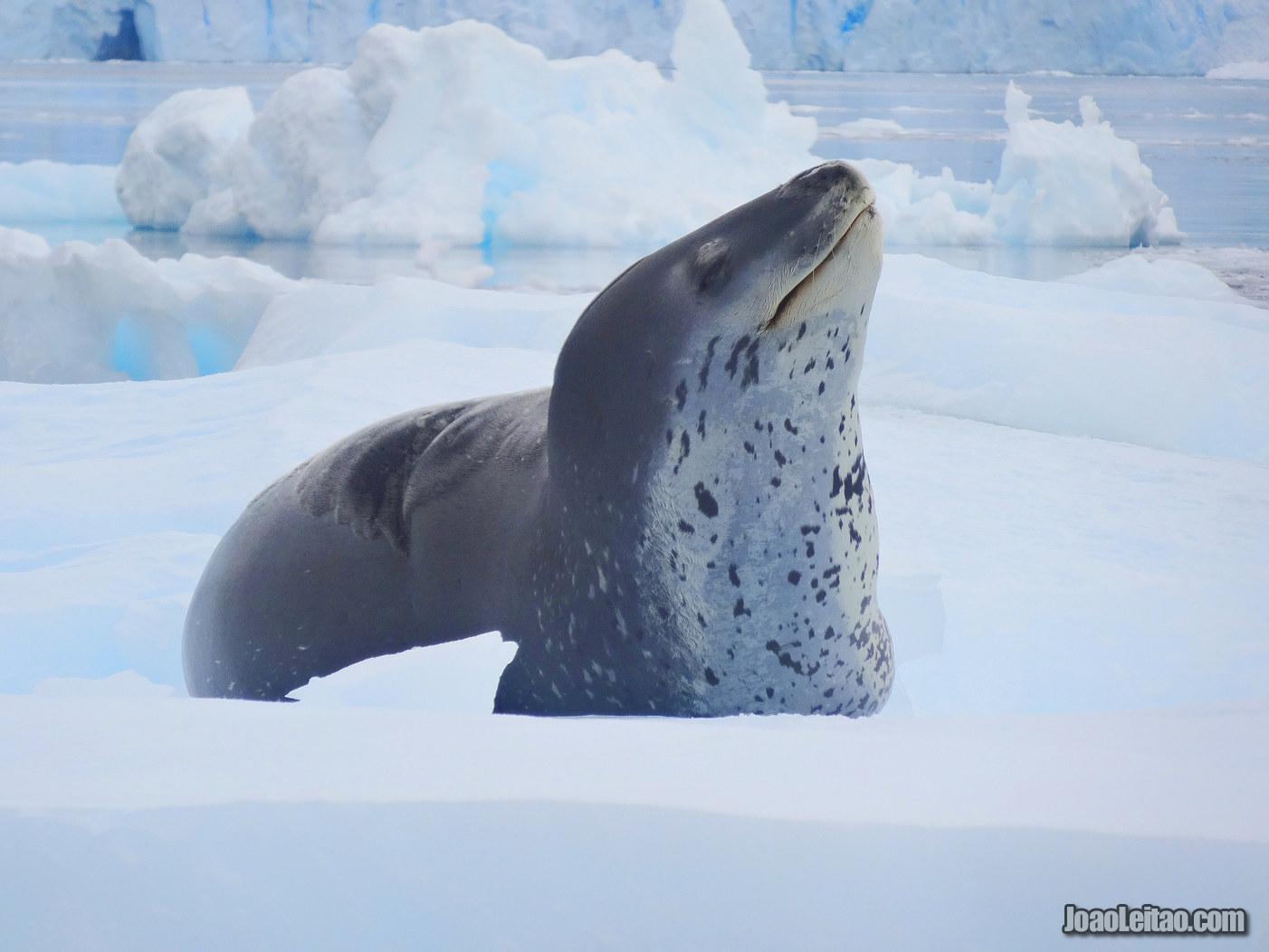 Clima na Antártida