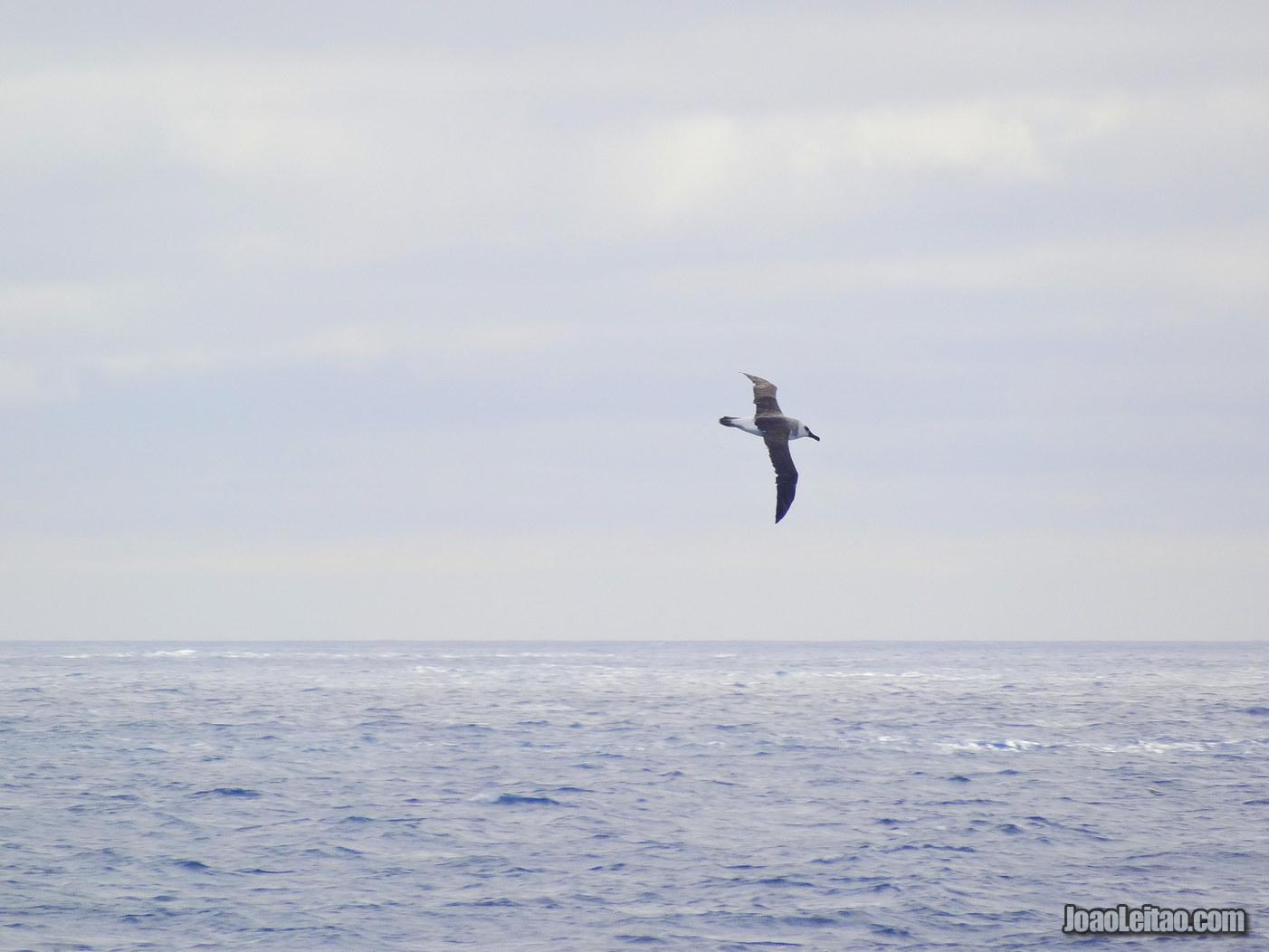 Atravessar Passagem de Drake na Antártida