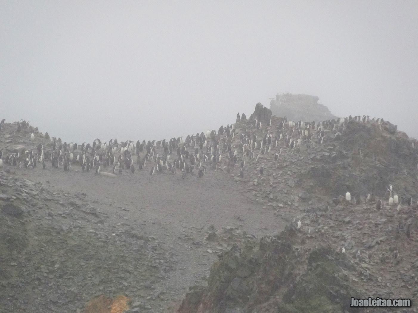 Half Moon Island na Antártida
