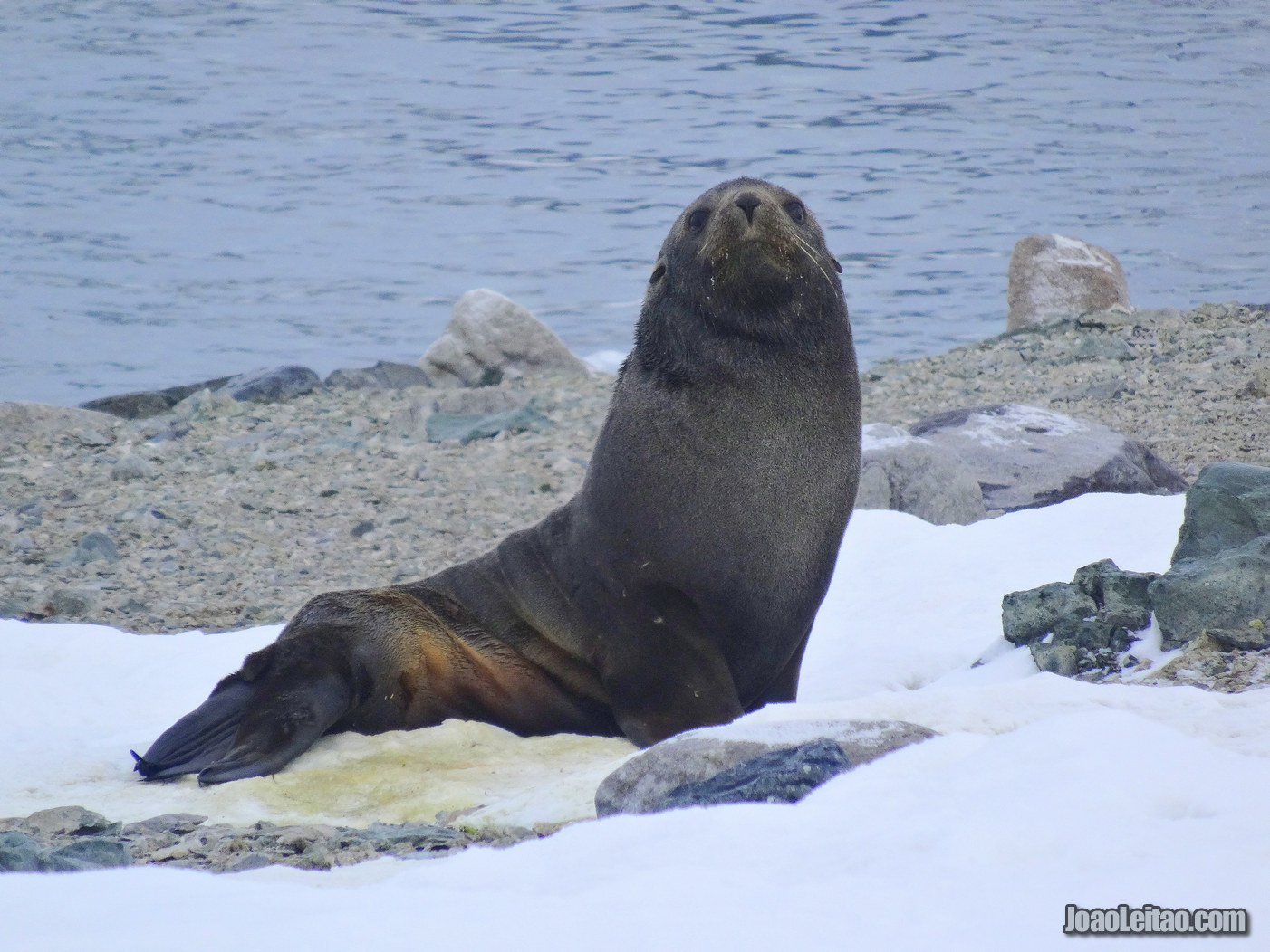 Visitar a Antártida - 17 Locais maravilhosos a não perder 10