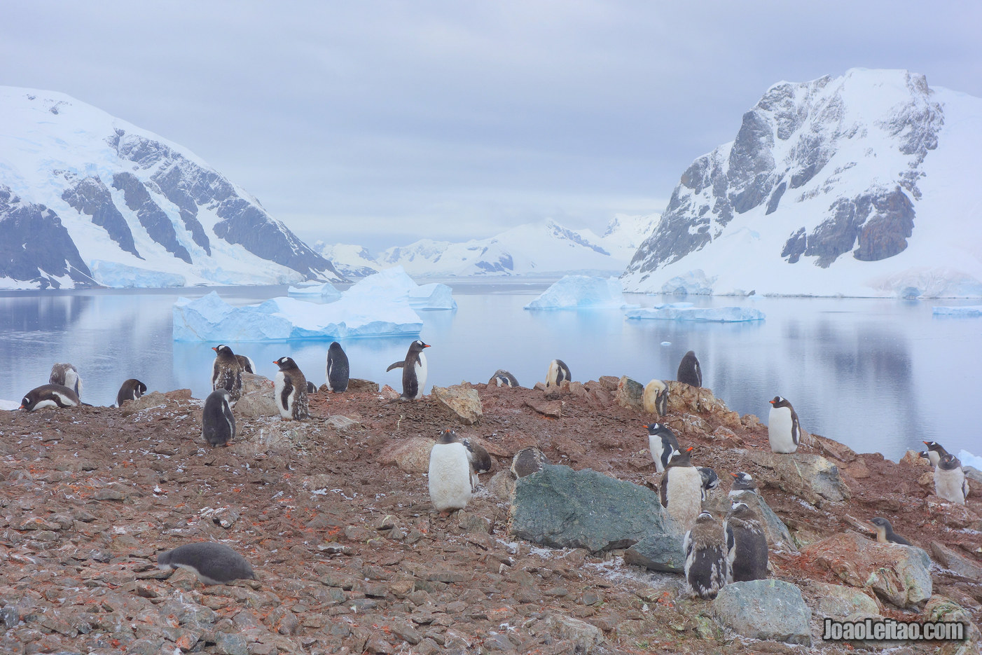 Ilha de Danco na Antártida