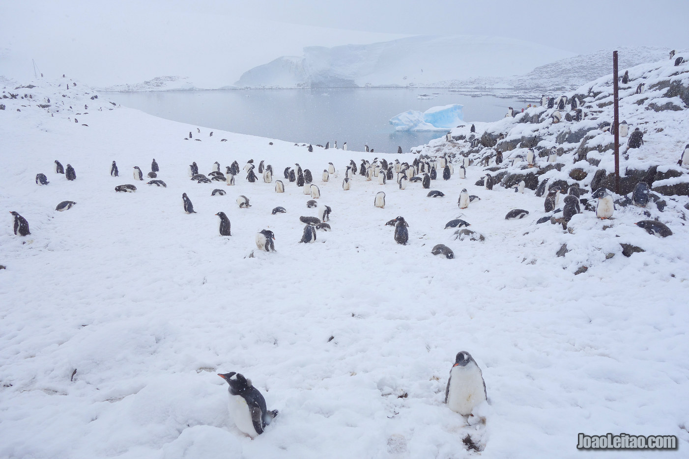 Ilha de Goudier na Antártida