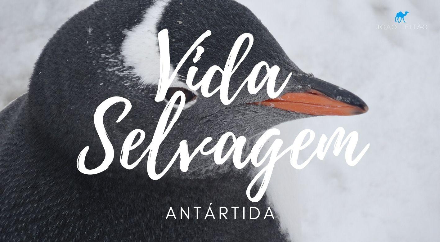 Vida Selvagem na Antártida