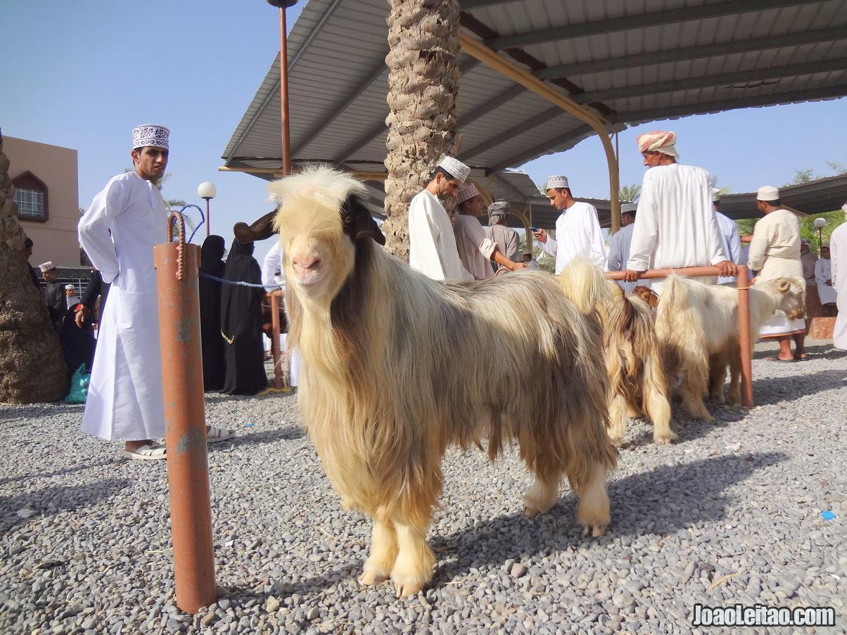 Visitar Nizwa, Omã: Roteiro e Guia Prático de Viagem 2