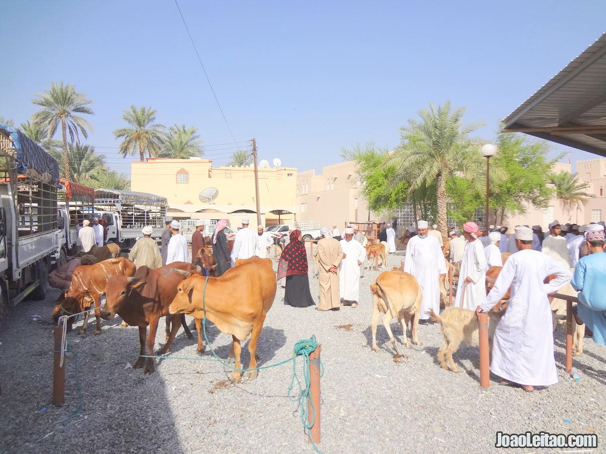Visitar Nizwa, Omã: Roteiro e Guia Prático de Viagem 15