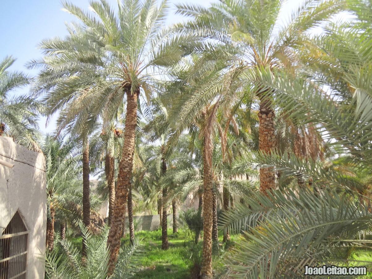 Visitar Nizwa, Omã: Roteiro e Guia Prático de Viagem 19