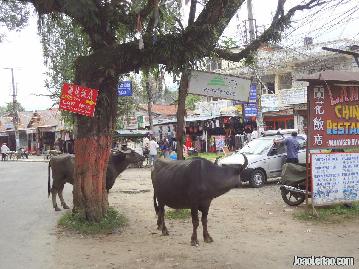 O que fazer em Pokhara no Nepal 10