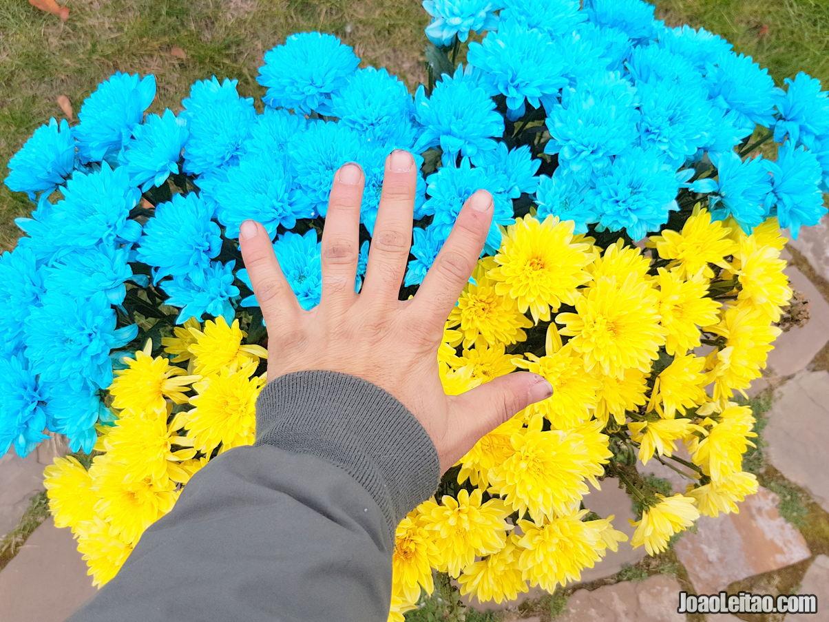 Visitar Baturyn, Ucrânia: Roteiro e Guia Prático de Viagem 8