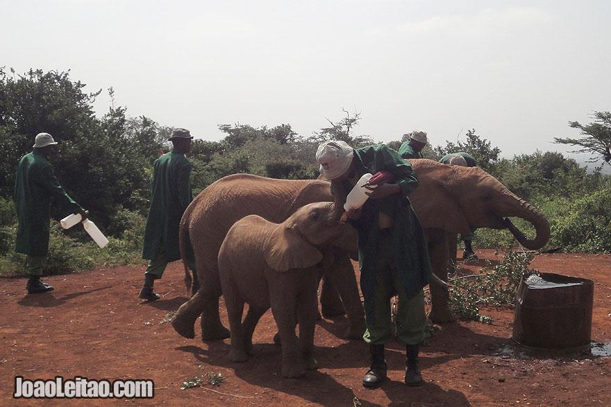 Visit Nairobi Sheldrick Elephant Orphanage Kenya