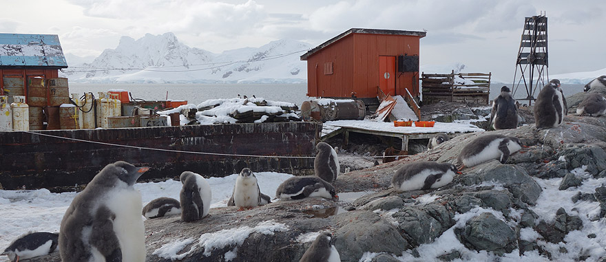 Visit Almirante Brown Station - Antarctica Travel Guide