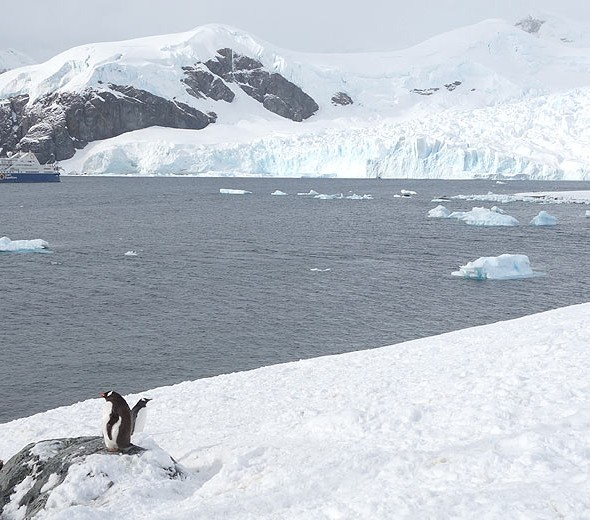 Antarctica Cruise Expedition
