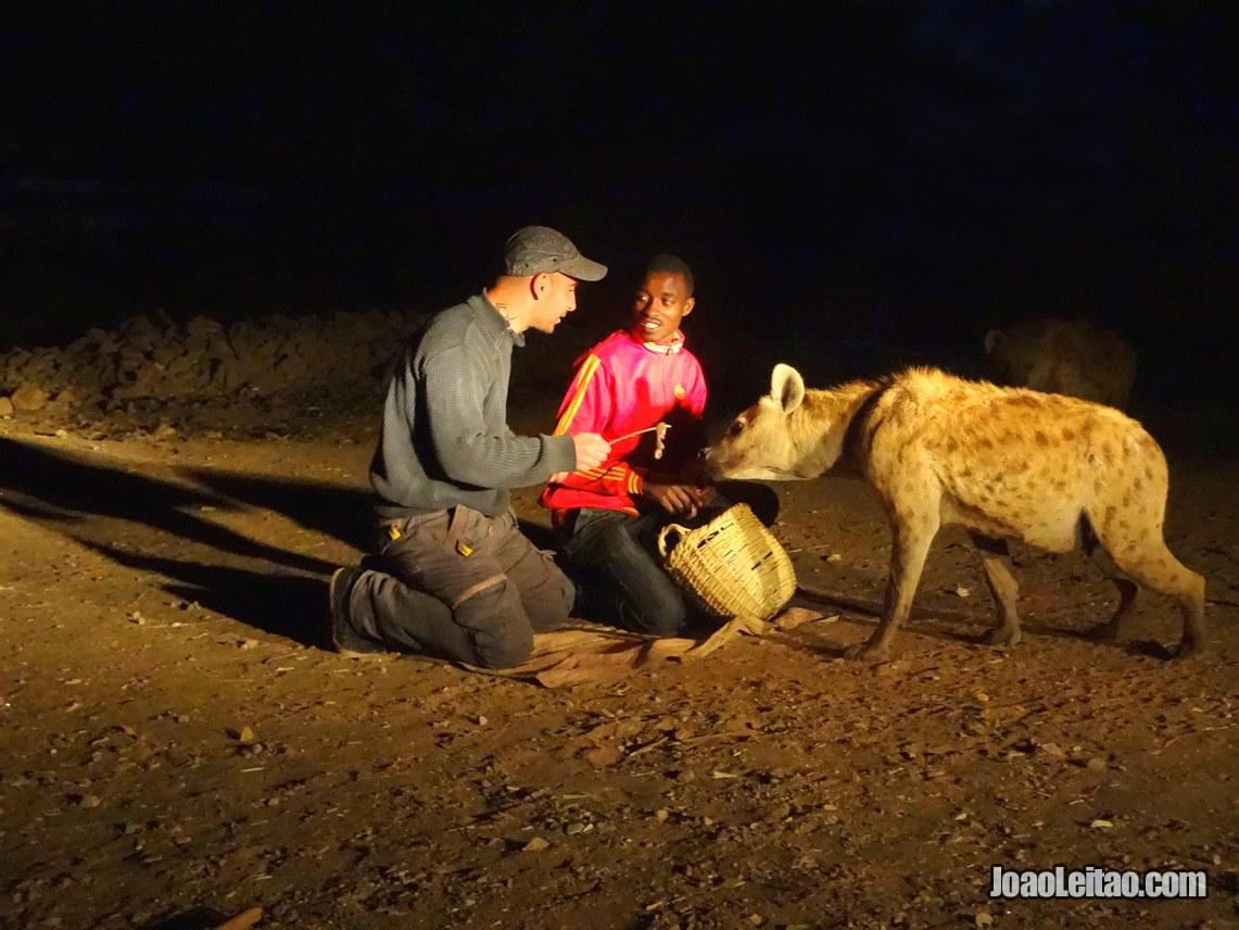 A alimentar hienas selvagens na cidade de Harar, na Etiópia