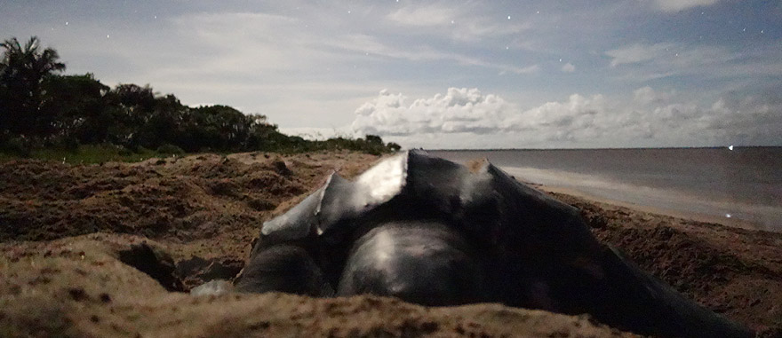 Visit Awala in French Guiana