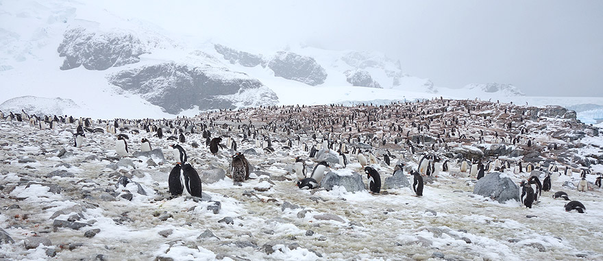 Visit Cuverville Island - Antarctica Travel Guide