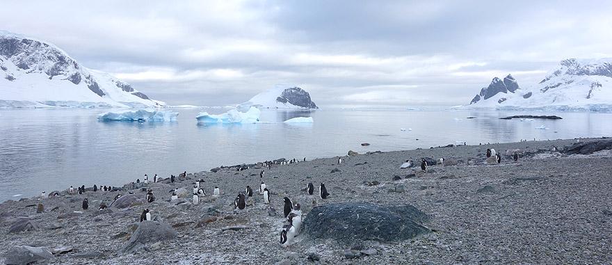 Visitar Ilha de Danco - Antartida