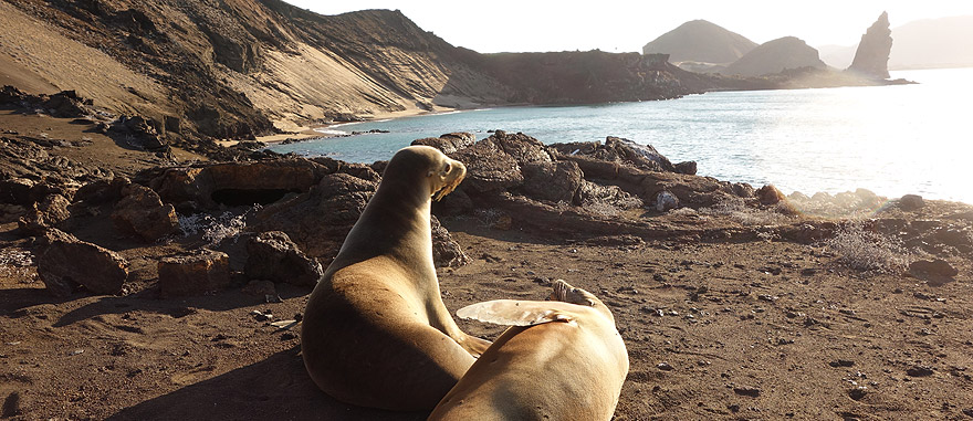 Visit Galapagos in Ecuador South America Travel Guide
