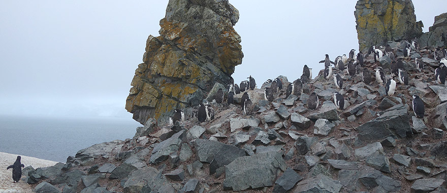 Visit Half Moon Island - Antarctica Travel Guide