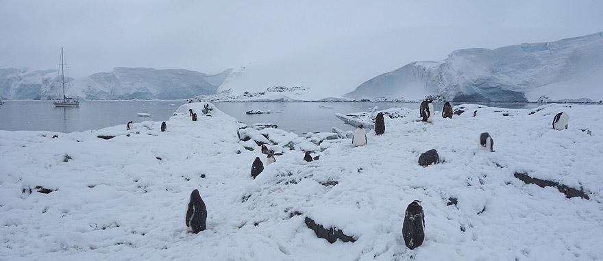 Visit Jougla Point - Antarctica Travel Guide