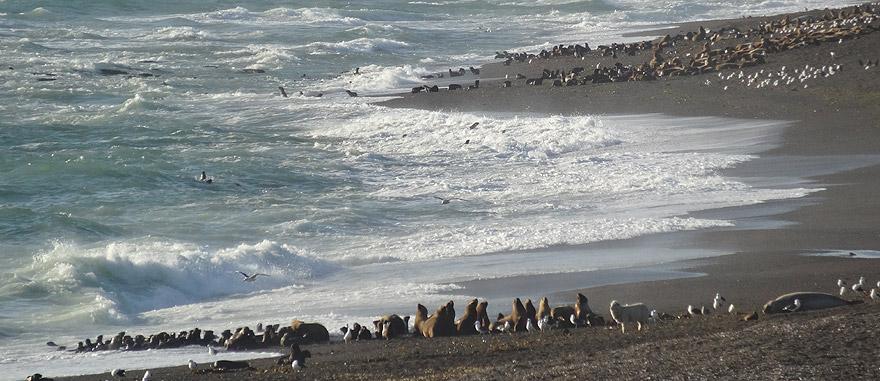 Visit Valdes Peninsula in Argentina