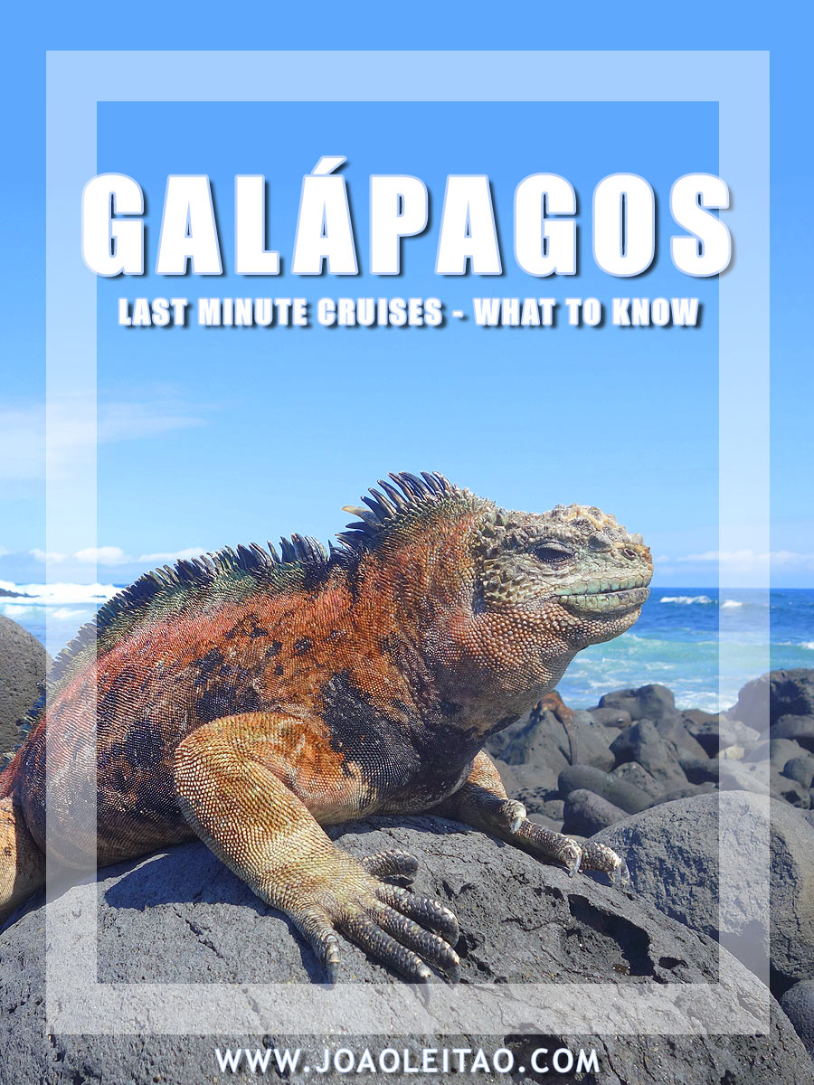 Galapagos Islands Last-Minute cruises – What to know