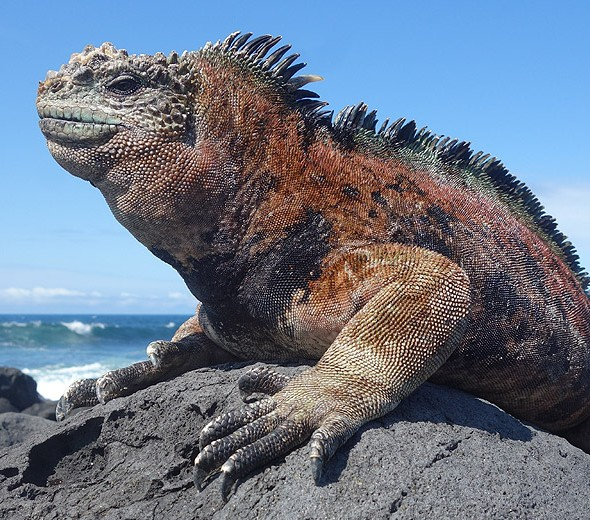 Galapagos Last Minute Cruise