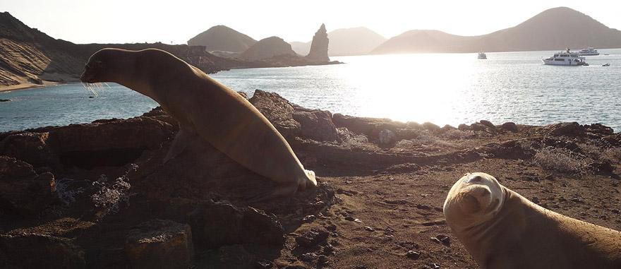 Sea Lions in Bartolome Island Galapagos