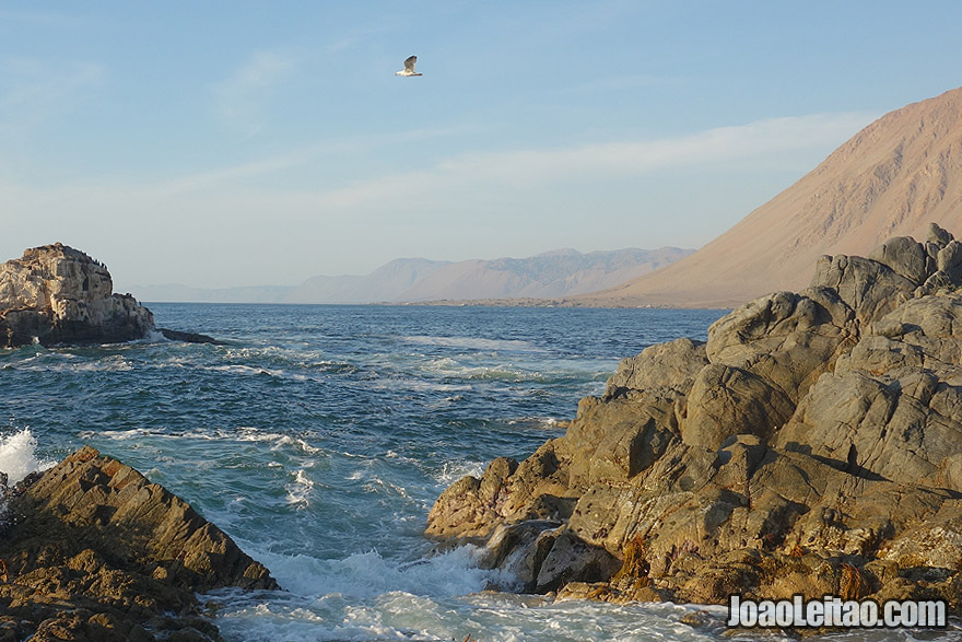 Coast of Atacama Desert Chile