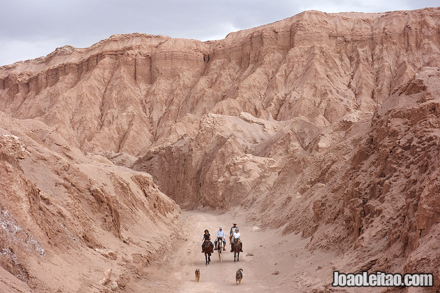 Photo of Horse riding and dogs in the Death Valley of Atacama Desert Chile