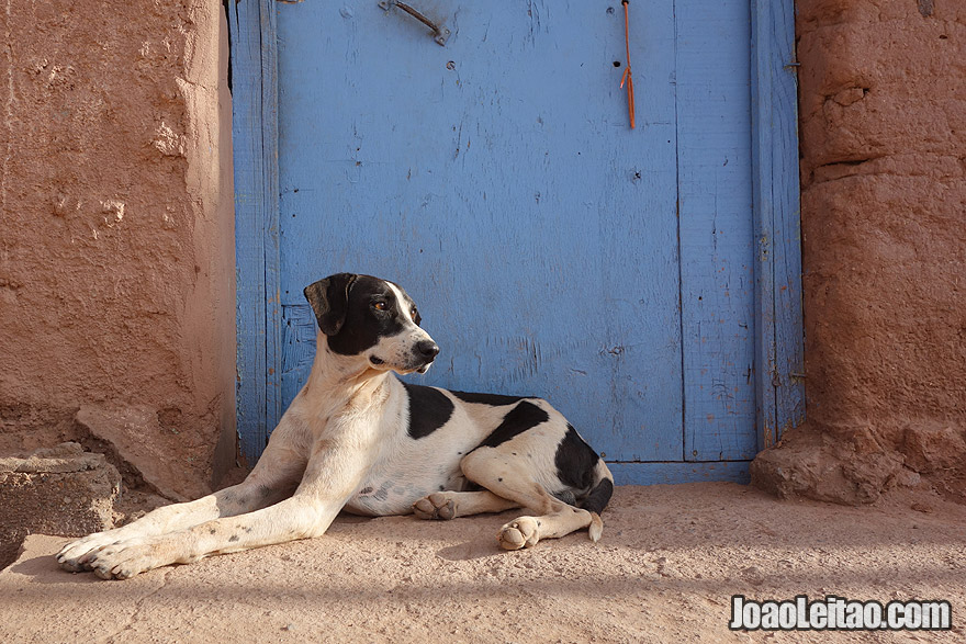 Photo of Dog in Atacama Chile
