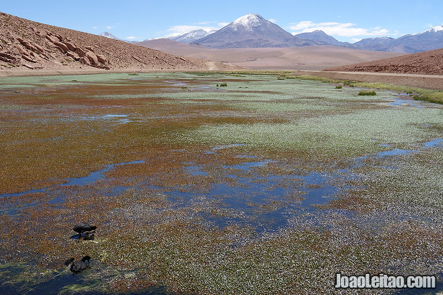 Lake with ducks and Volcano in Atacama Desert Chile