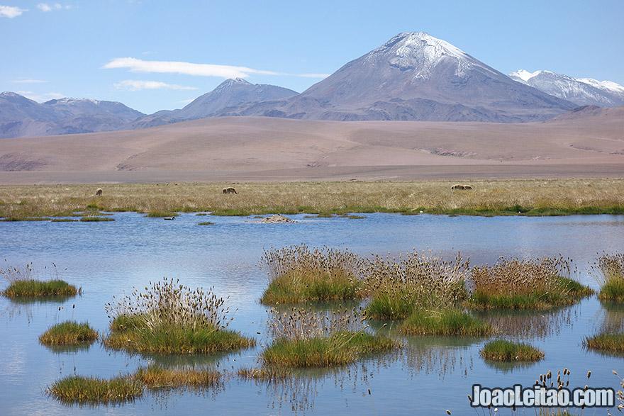 Lake and Volcano in Atacama Desert Chile