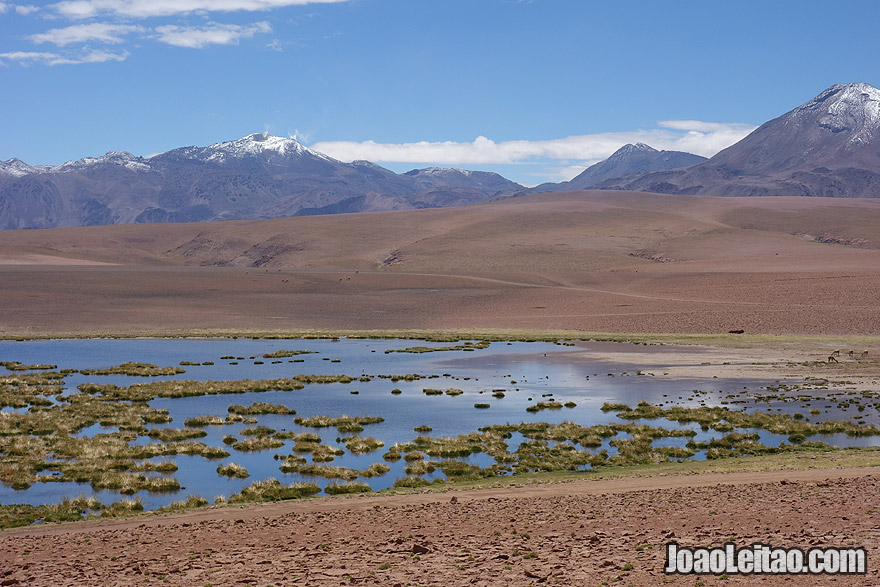 Gorgeous Landscape in Atacama Photo