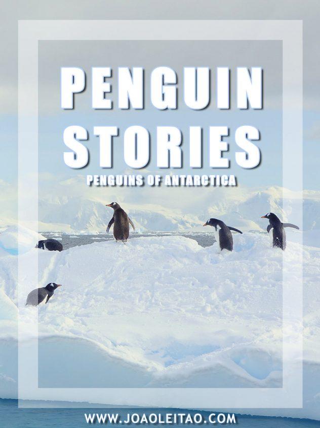 Penguin Stories of Antarctica - Surviving Petermann Island
