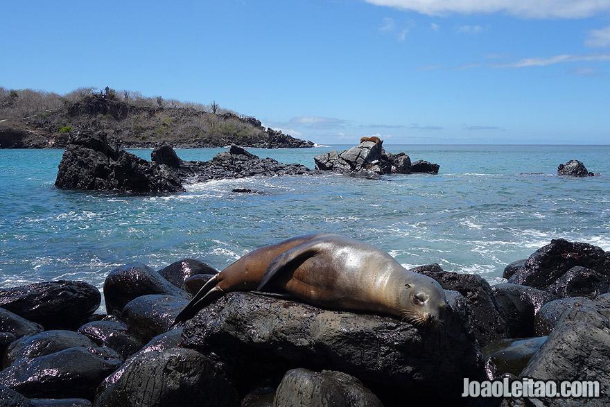 Photo of SEA LION sleeping in Galapagos, Ecuador