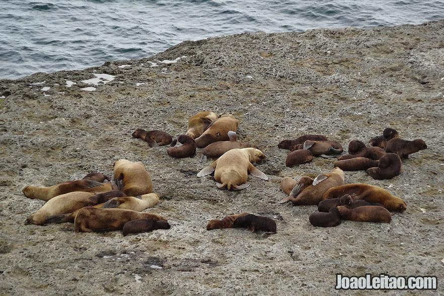 Photo of SEA LIONS in Valdes Peninsula, Argentina