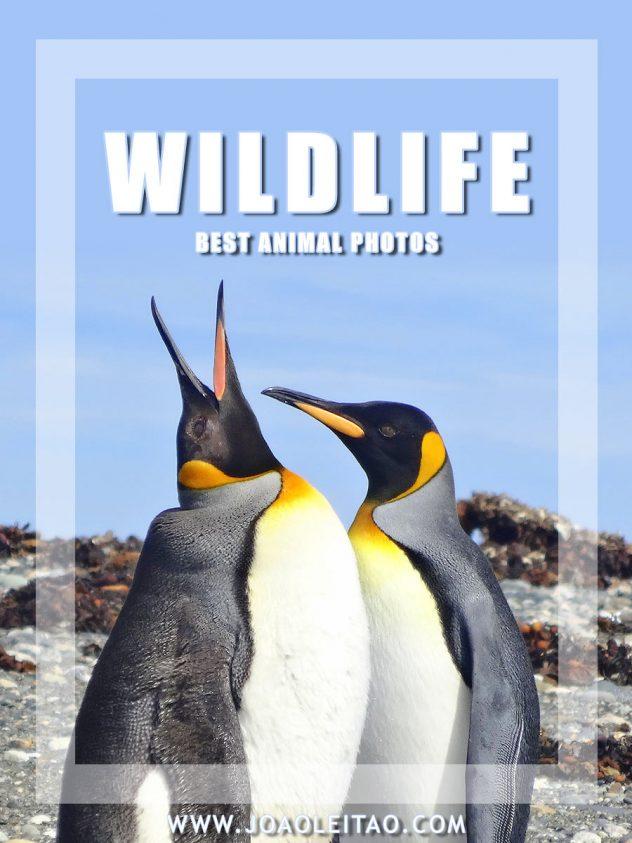 Best wildlife travel photos - Images of wild animals