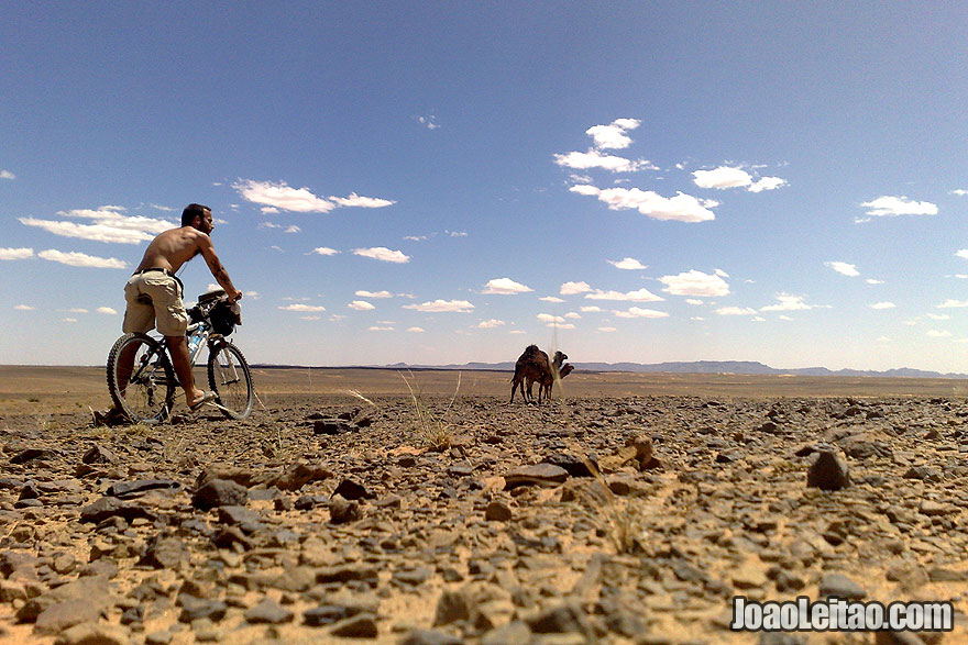 Biking Sahara Desert along with camels