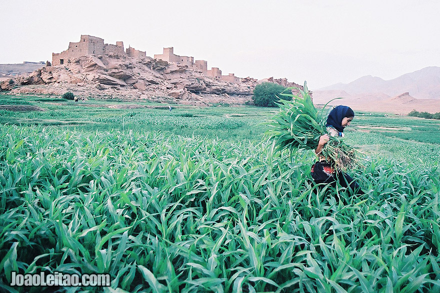 Photo of young girl working on the fields of Tamtettoucht in the Atlas Mountains, Morocco