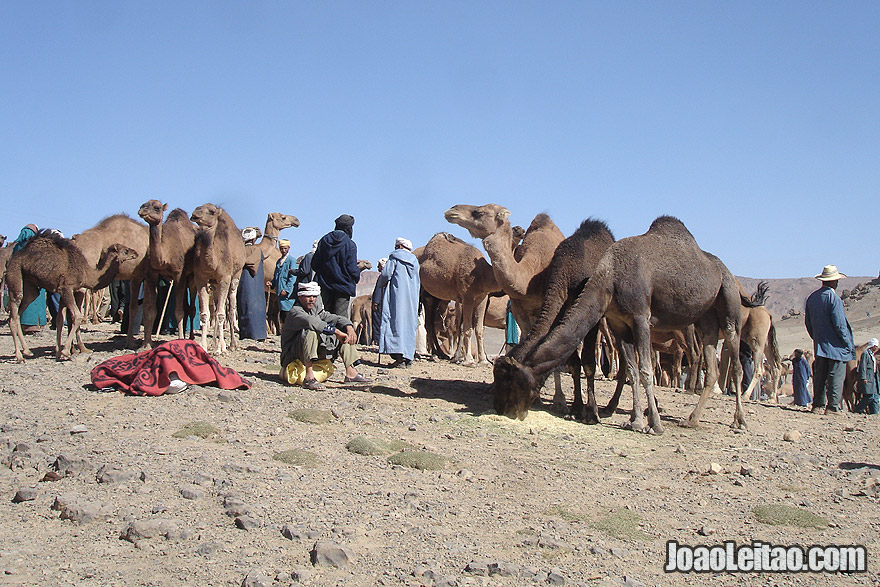 Camel Market in Imilchil
